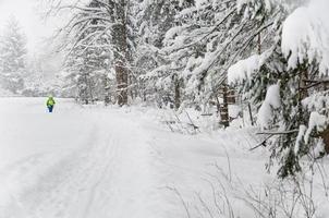 nordic walking in an idyllic winter landscape