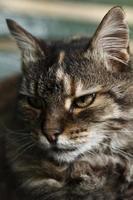 Stray's Portrait photo