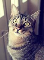 gato retrato retro