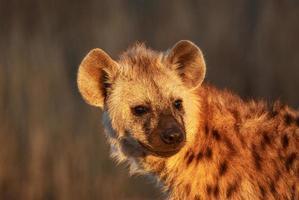 retrato de filhote de hiena