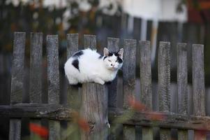 Katze photo