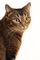 gato de cerca foto