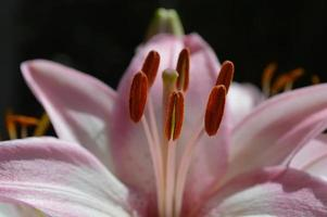 flor de perto