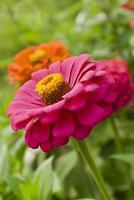 close-up de flores