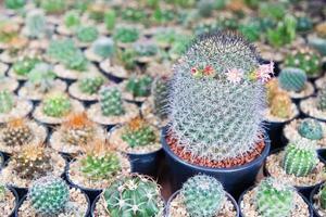 cactus close up photo