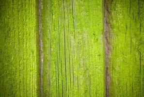 Mossy wooden background texture photo
