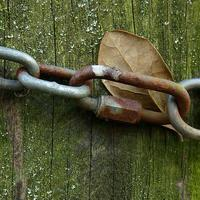 Chained Leaf photo