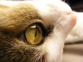 primer plano del gato foto