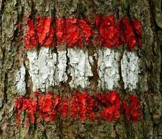 Austrian Flag On Tree