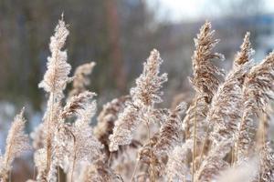 Close-up reed