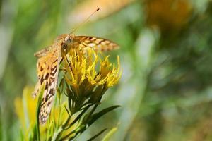 mariposa de cerca foto