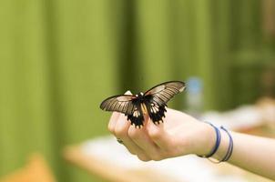 Portrait of live butterflies. photo