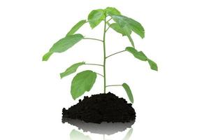 Tree and soil on white background
