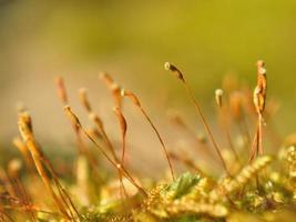 Bright moss macro shot in spring photo