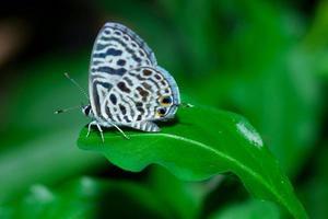pequeña mariposa foto