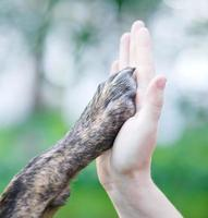 Dog paw in a human hand, high five style