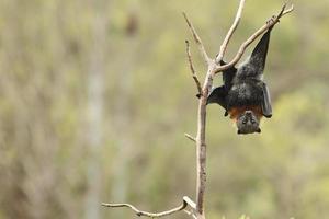 Bat photo