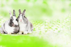 Cute rabbit on green natural background