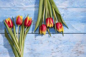 Red yellow tulips, bouquets on blue wood