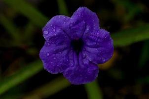 flor de corazon foto