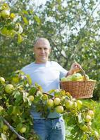 hombre en huerto de manzanas foto