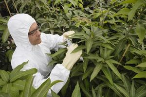 Worker In Protective Overalls Measuring Plants photo