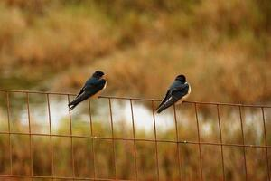 Birds resting on a fence