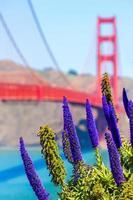 Golden Gate Bridge San Francisco purple flowers California photo