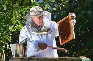Apicultor experimentado senior haciendo inspección en colmenar después de la temporada de verano foto