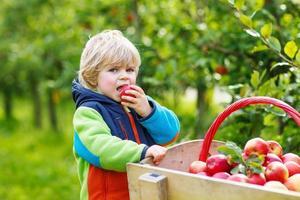 menino da criança na fazenda de apple colheita colheita