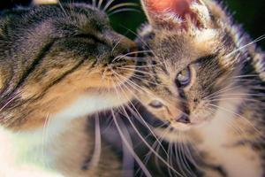 dois gatos