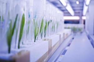 cultivo de tejidos vegetales