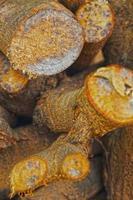 Montón de textura de fondo de madera de pino foto