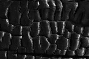 tronco de árbol carbonizado foto