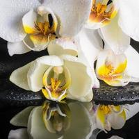 Beautiful spa setting of white orchid (phalaenopsis)
