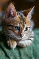 Charming bengal cat photo
