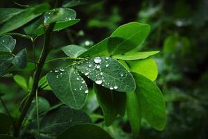 waterdruppel op het blad