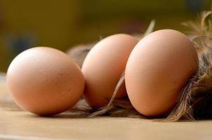 huevo foto