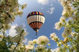 Big balloon flies over field of flowering photo