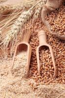 Wheat grains and bran photo