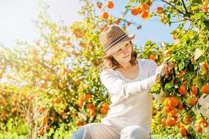 Caucasian girl harvesting mandarins and oranges in organic farm photo
