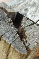 Holes in wood background