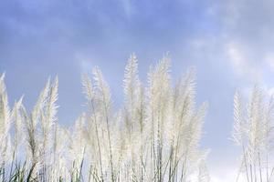 Grass flower  against cloudy sky photo