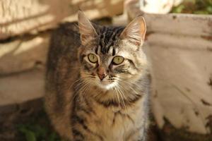 lindo gato disfrutando de su vida foto