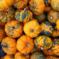 Heap of tiny spotted pumpkins. Background photo