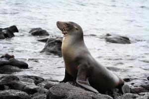 Sea lion enjoying a sunbath