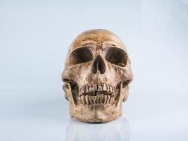 Skull on white background photo