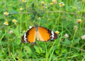 hermosa mariposa foto