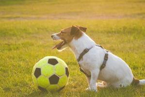 Tired dog with a ball photo