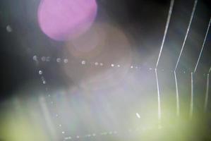 tela de araña de trama de fondo foto
